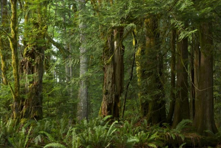 Duurzame bank: regenwoud